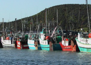 Fishing boats in the harbor in Newfoundland.