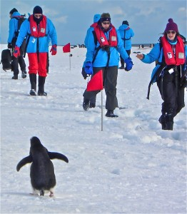 Passengers had to stay at least 5 yards from the penguins, who do not fear humans.